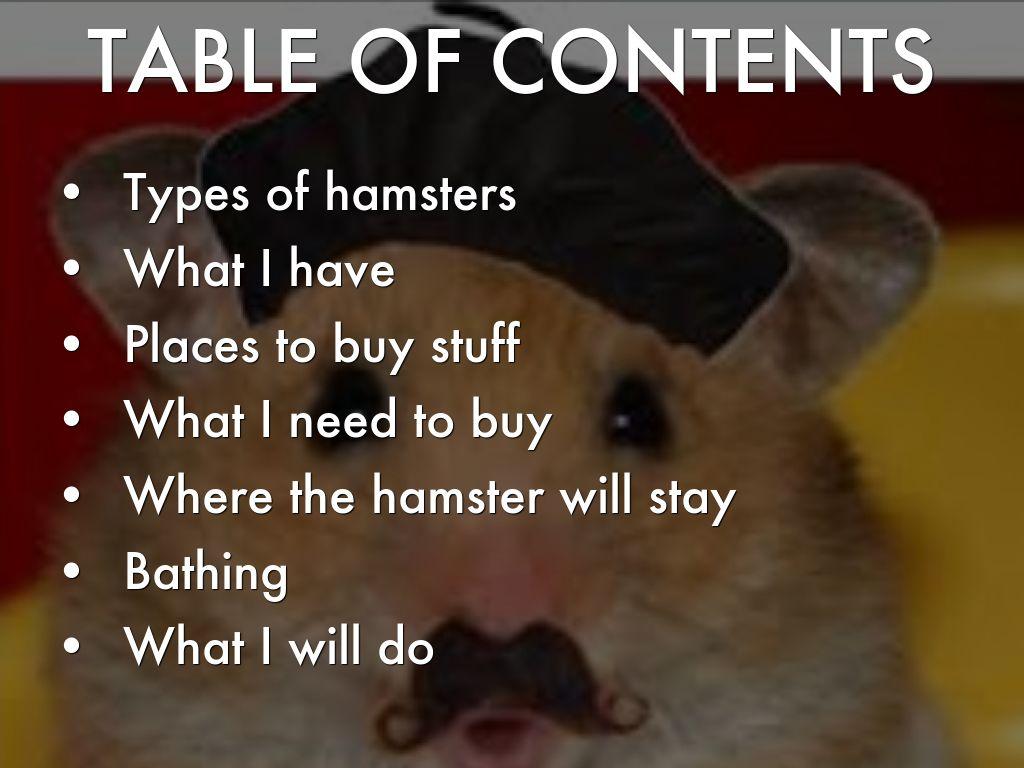 Hamsters by Kelsey Sullivan