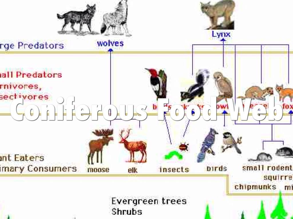 Northwestern Coniferous Forest Plants