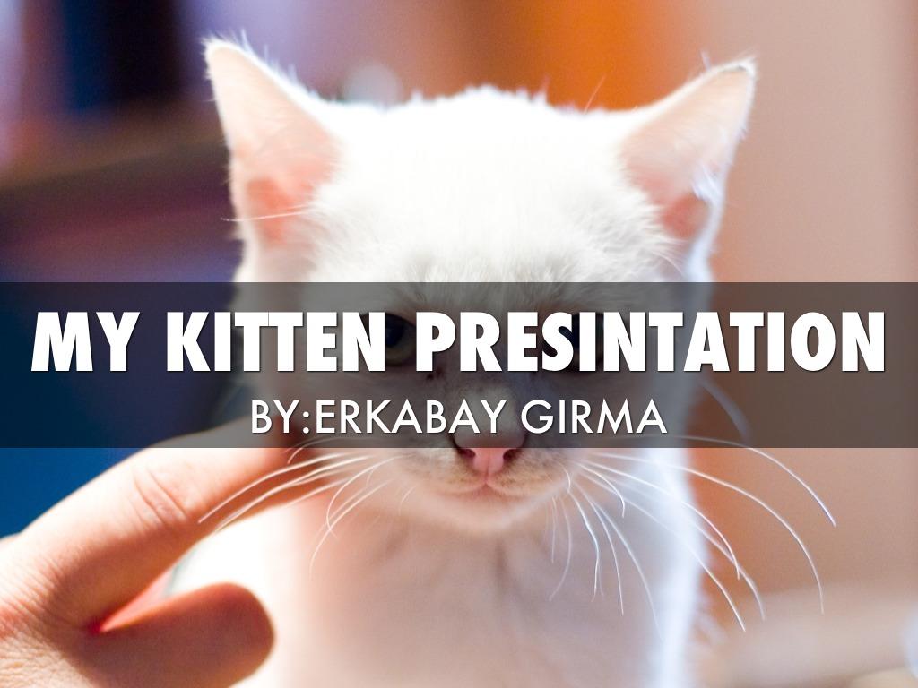 Kitten Presintation