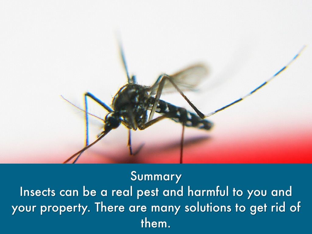 insects that may be harmful for