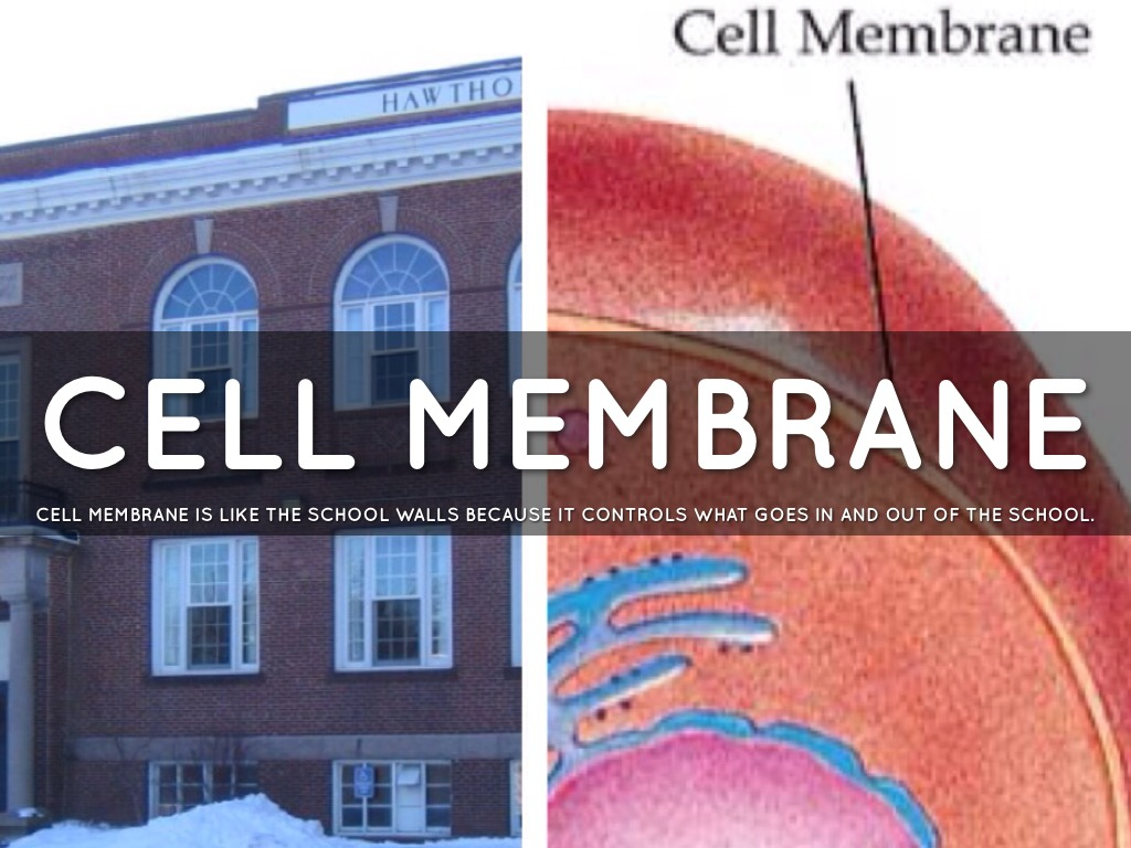 cell membrane analogy