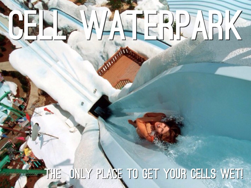 cell brochure  cell waterpark by anjali patel