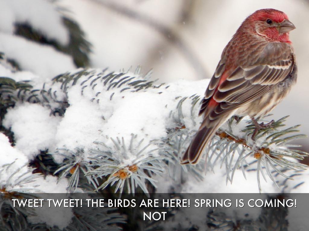 птички на снегу  № 101506 загрузить