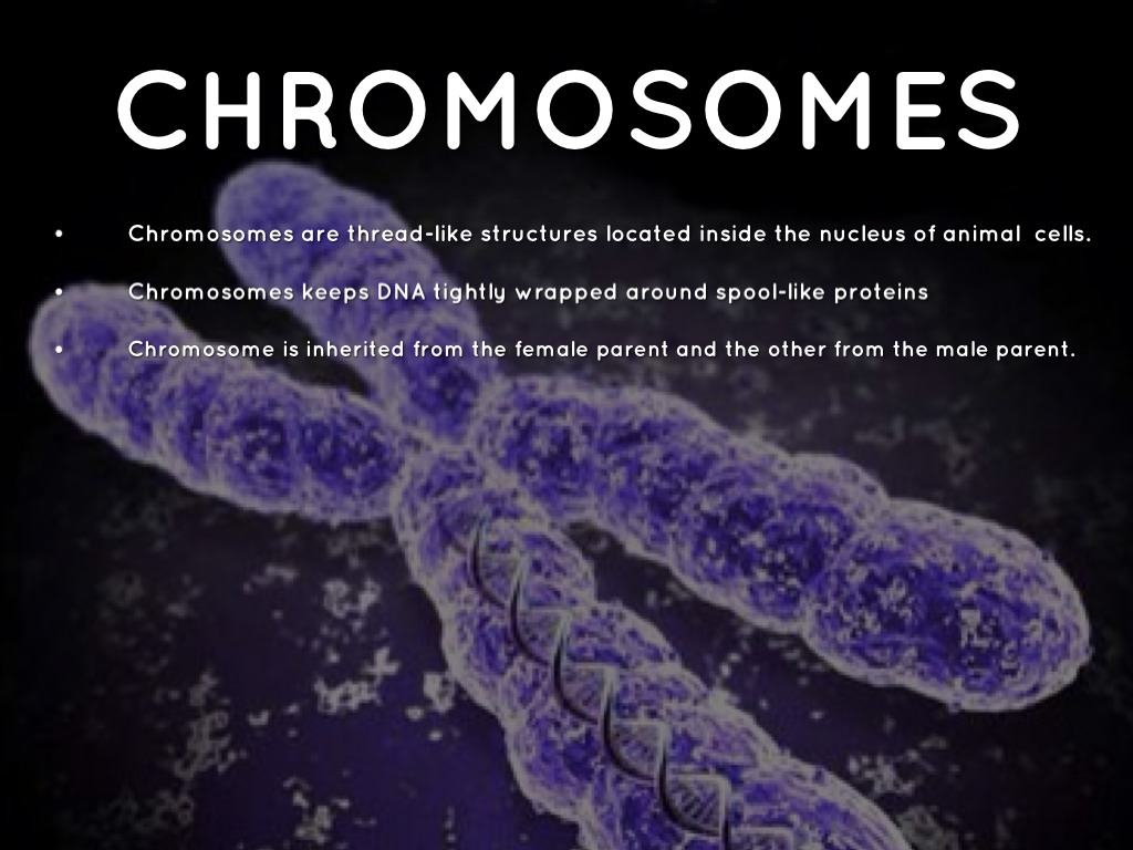 biology chromosome Biology notes for igcse # 95 chromosomes, dna each chromosome is made up of a large number of genes coding for the formation of different proteins which give.