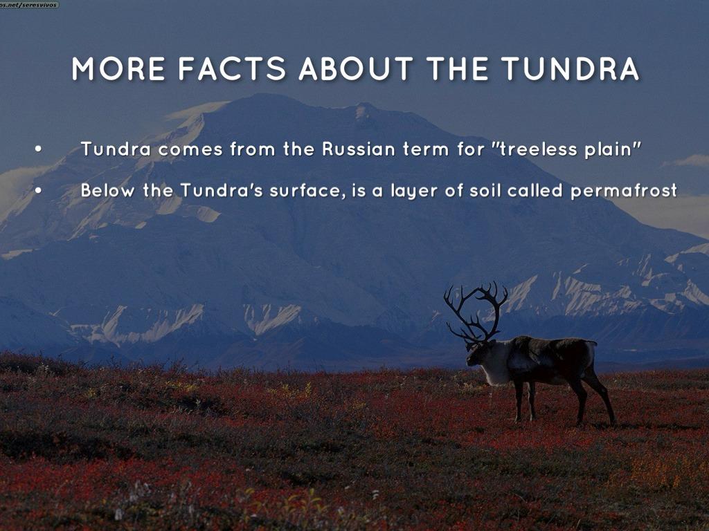 Tundra by Jun Park