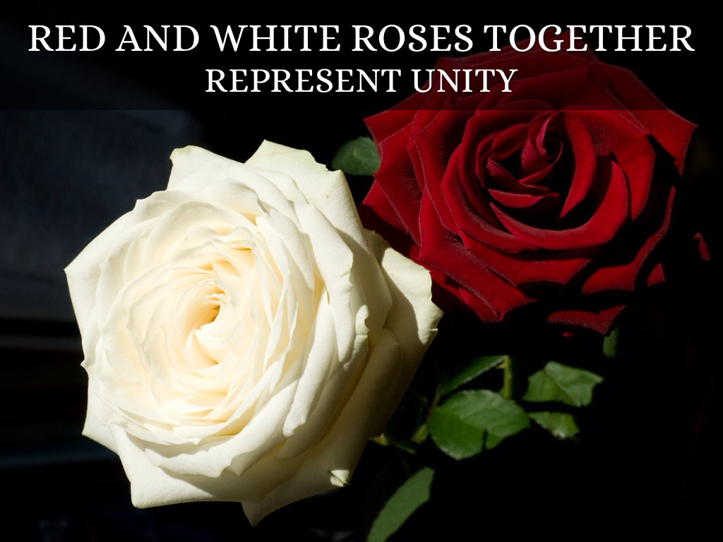 Roses by jen finkel martin red and white roses together biocorpaavc Choice Image