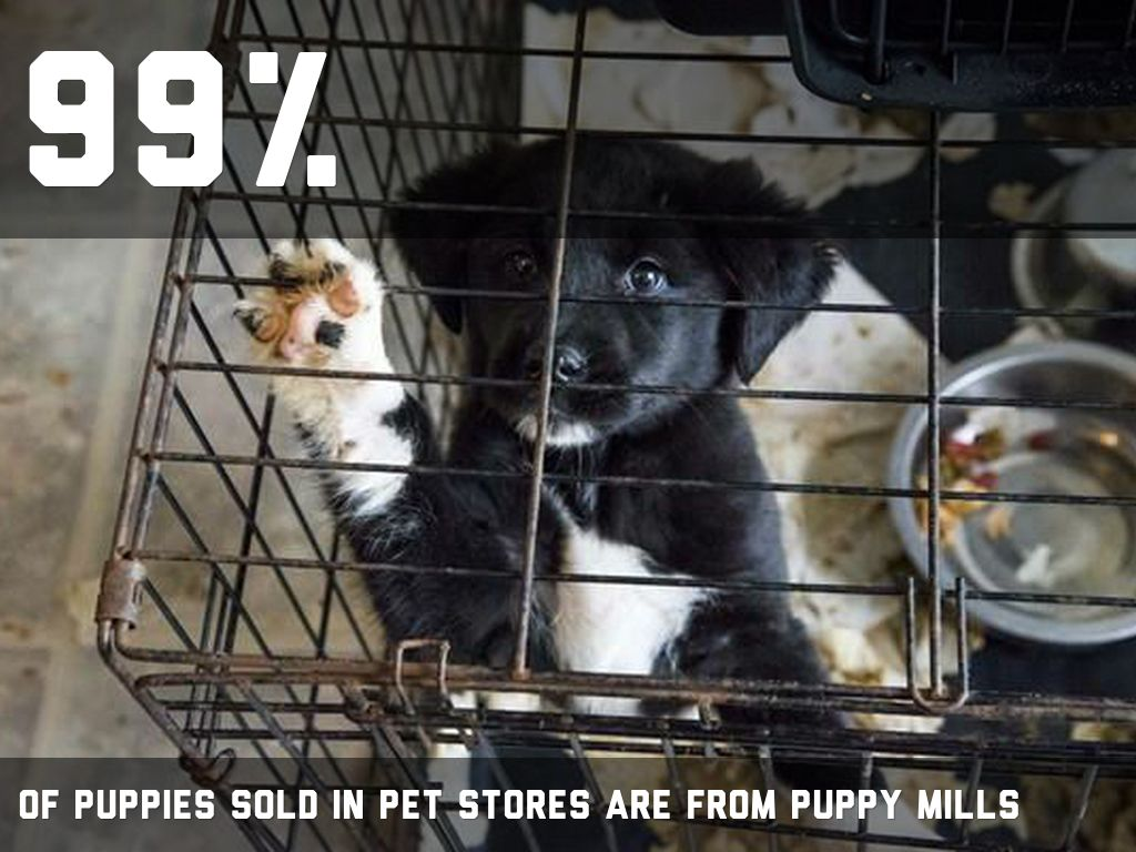 the harm of puppy mills essay