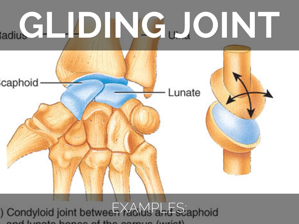 Attractive Examples Of Hinge Joints Festooning Human Anatomy