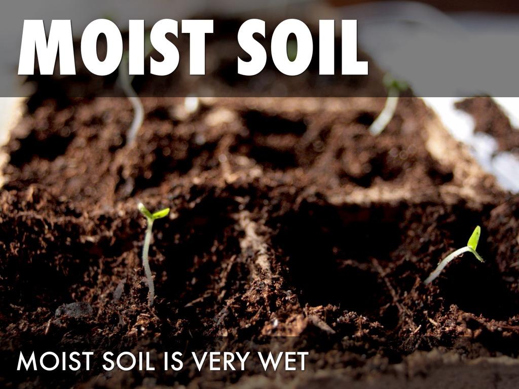 Tropical rainforest by nilahhoward for Soil 4 climate