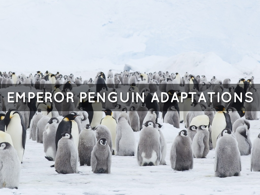 Penguin Adaptations by Kyle Evans
