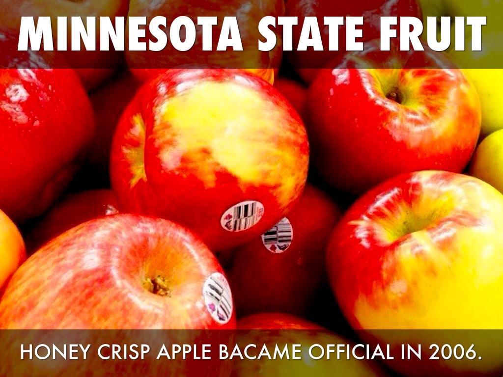 Minnesota Symbols By Skylar Borresen - What state is mn