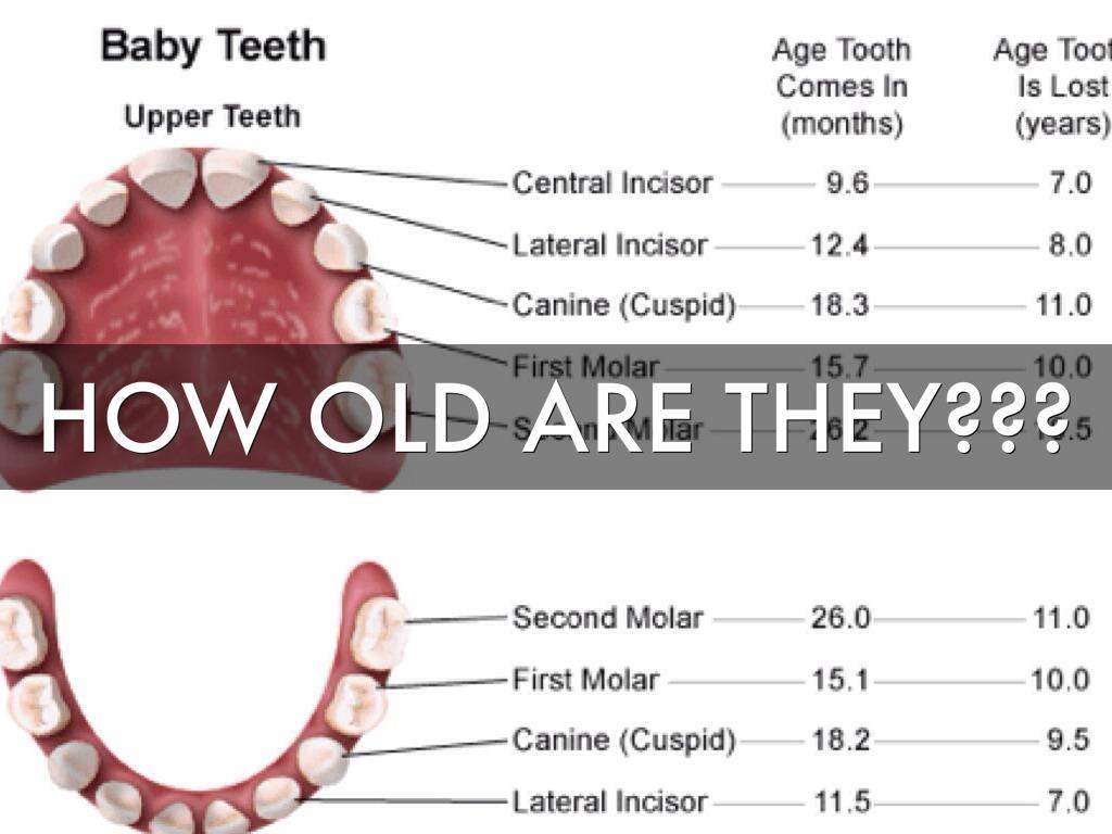 Names of teeth 30f8f83f 371e 4218 924f pooptronica