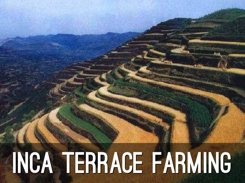 Inca and aztec fall by alex lemos for Terrace farming