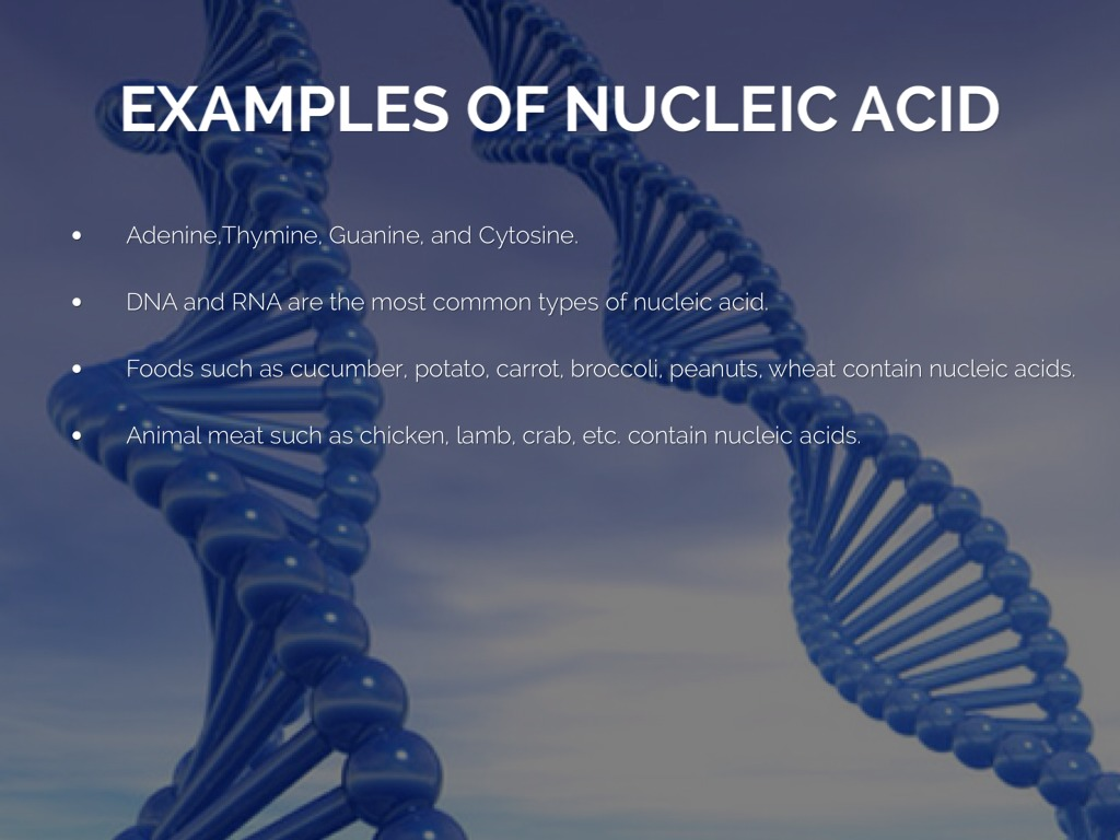 Examples of nucleic acids michael l's nucleic acid project.