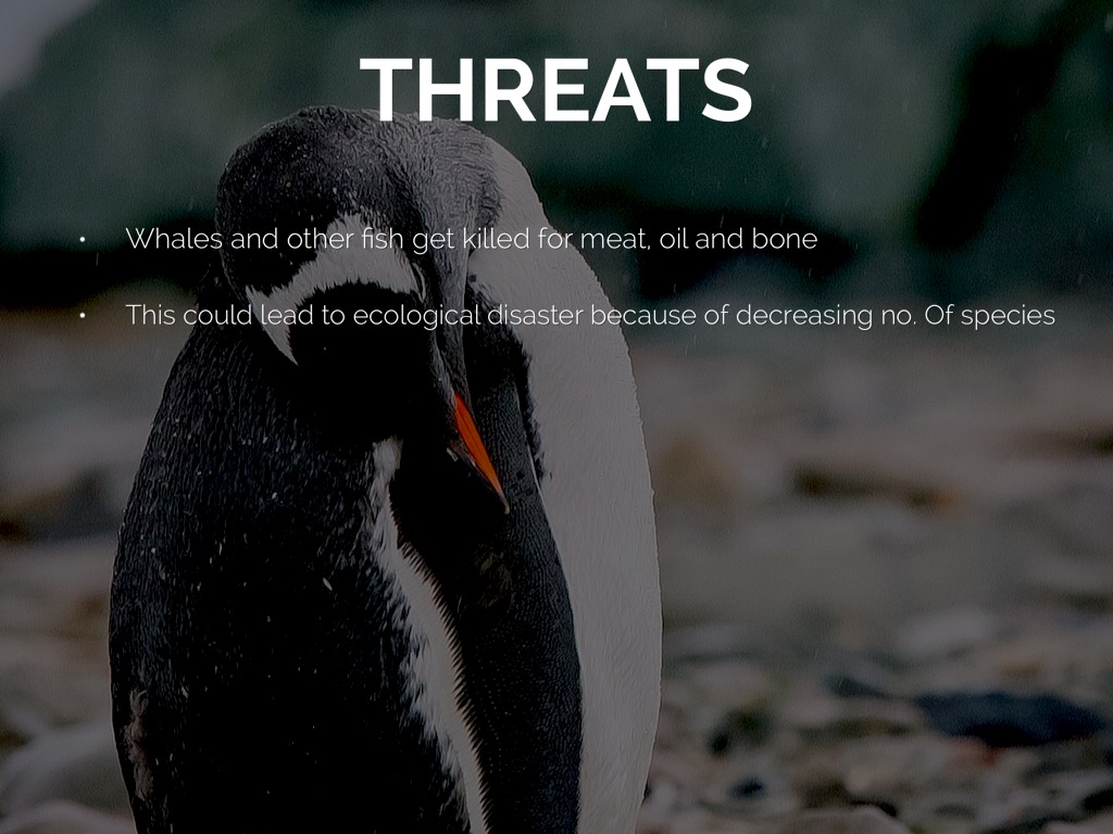 threats to antarctica Life in the planet's polar regions can be antarctica is protected by a 1959 treaty that established the continent as a they face multiple threats.