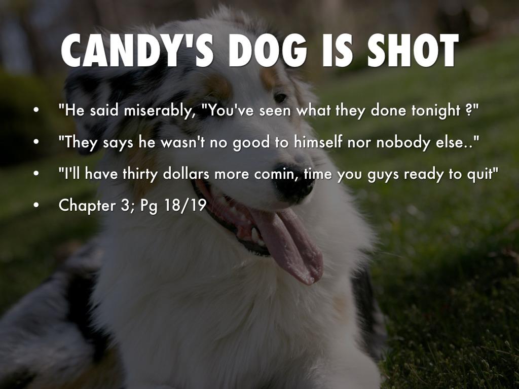 who killed candys dog