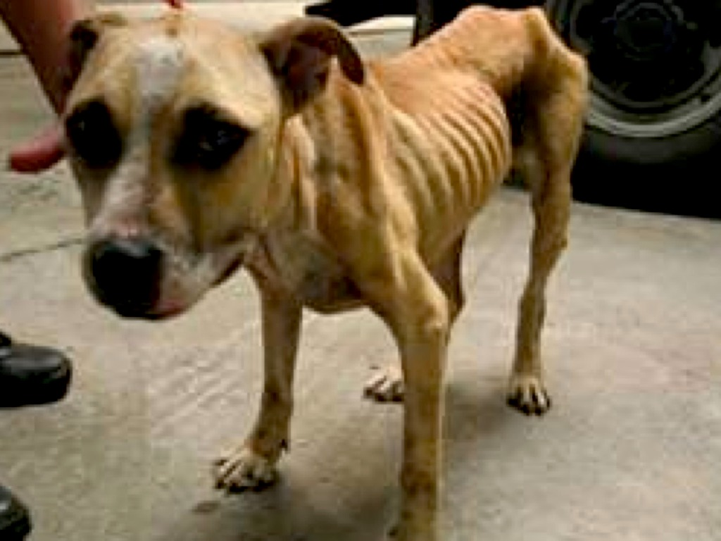 abuse of animals Animal cruelty is when someone hurts an animal or does not care for an animal responsibly, like not giving a dog or cat food and water it is against the law to be cruel to or harm animals, even your own pets.