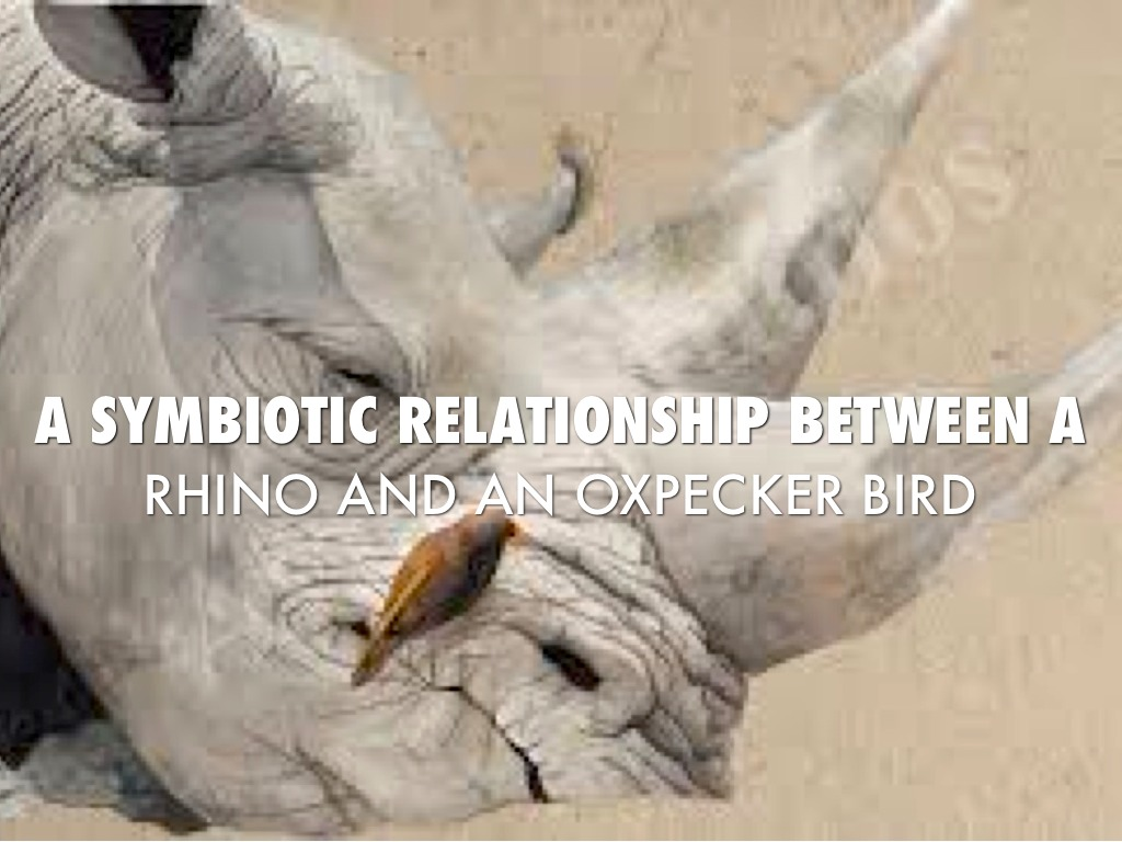 what has a symbiotic relationship with oxpecker