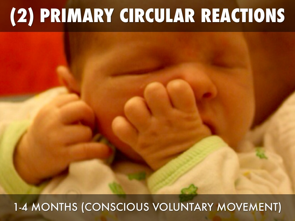what is primary circular reaction
