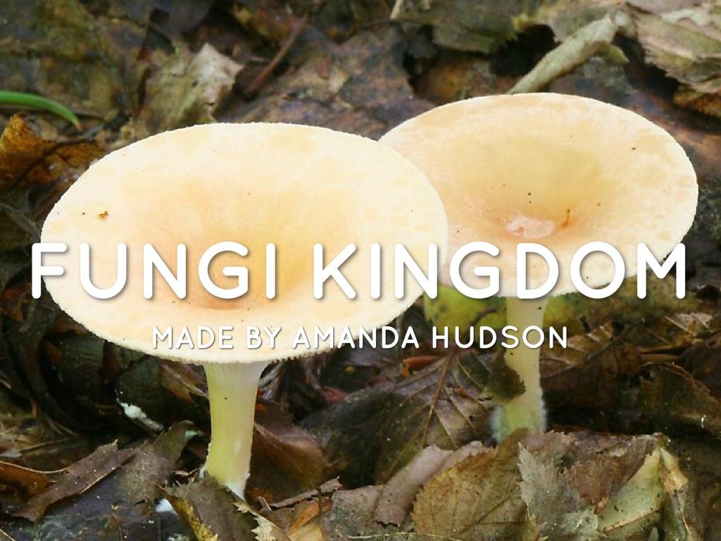 Fungi & Protista Kingdoms