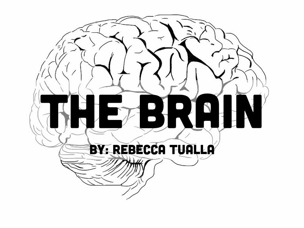 The Brain by Rebecca Tualla