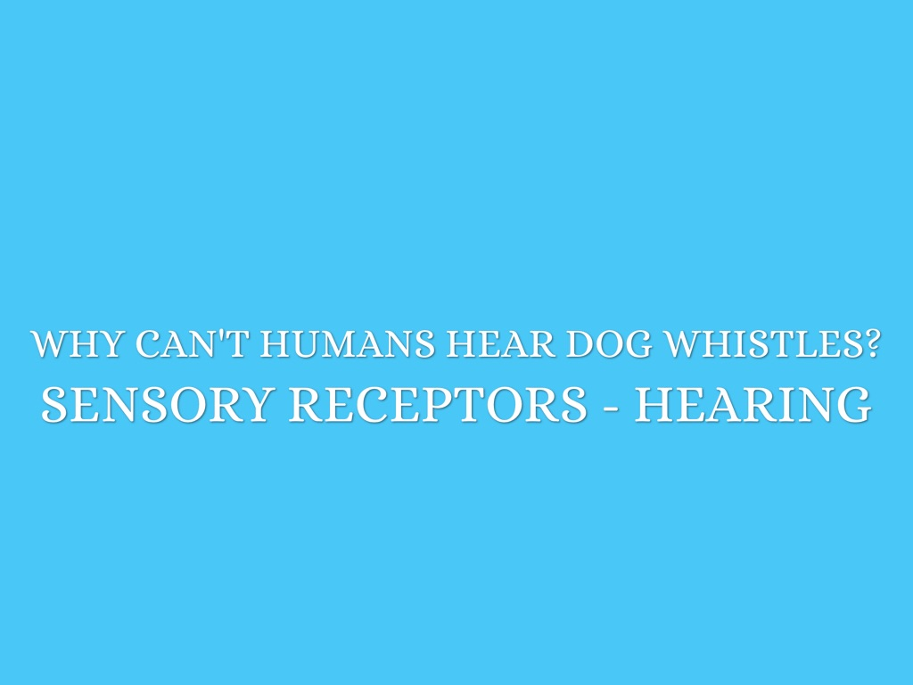Can Hear Fluid In Dog