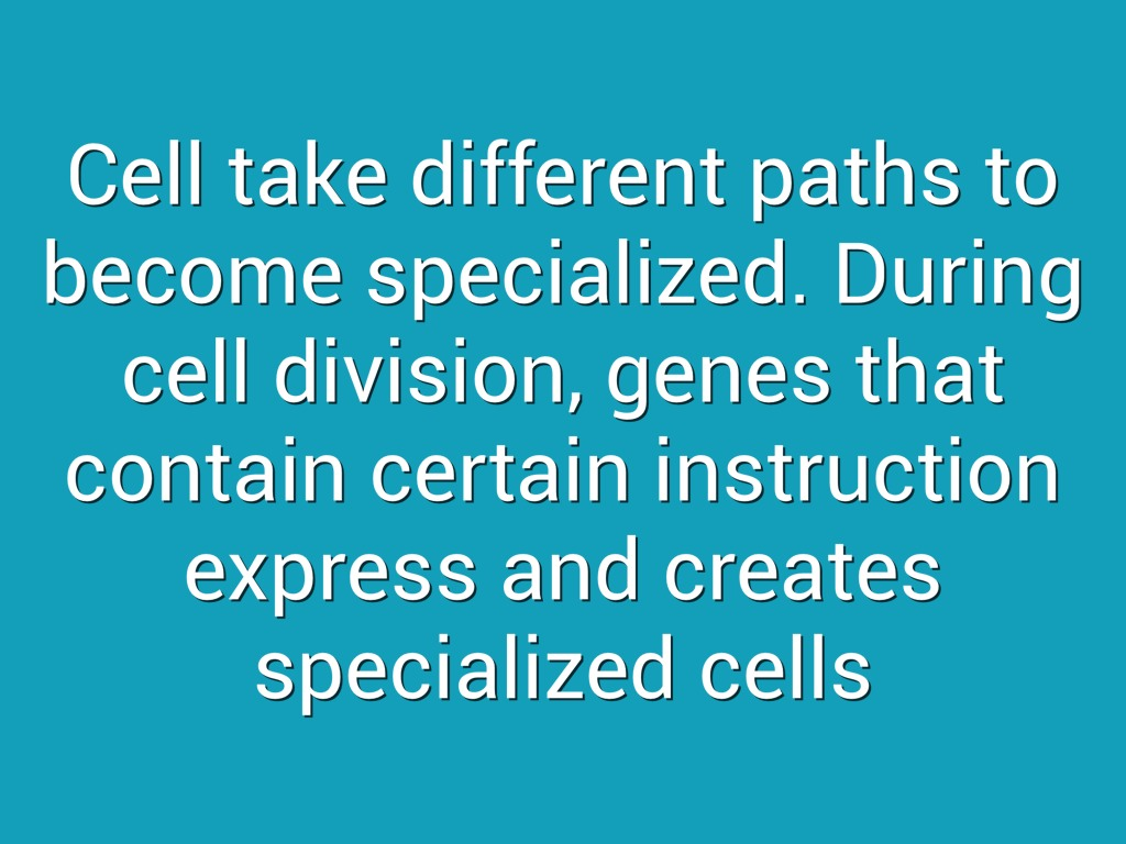 cells and cell specialization The findings could impact efforts to produce specific types of cells for future therapies to treat a broad range of diseases, as well as aid the understanding of which cells are affected by drugs that influence cell specialization.