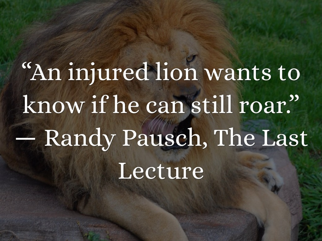 Tell me aphorisms about lions