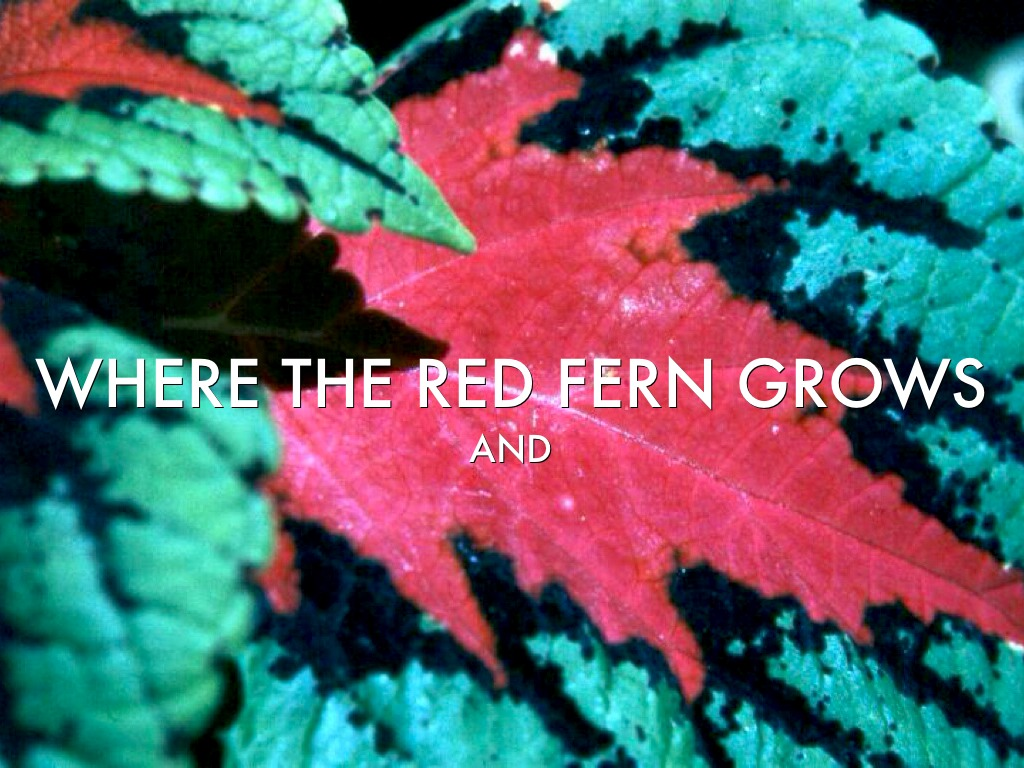 an analysis of where the red fern grows by wilson rawls Where the red fern grows by wilson rawls - chapter 3 summary and analysis.