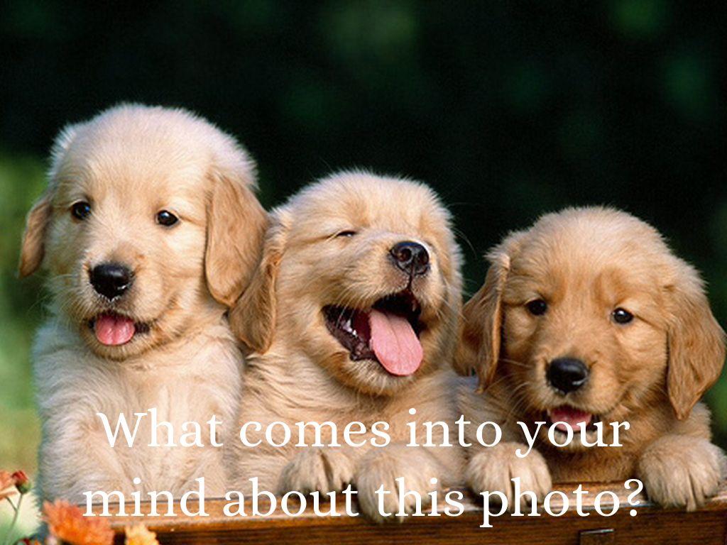 Ted Talk: Puppy Mills