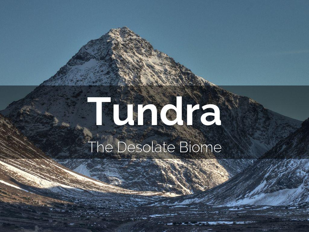 Tundra Arctic Fox In Summer The Tundra by Amanda I...