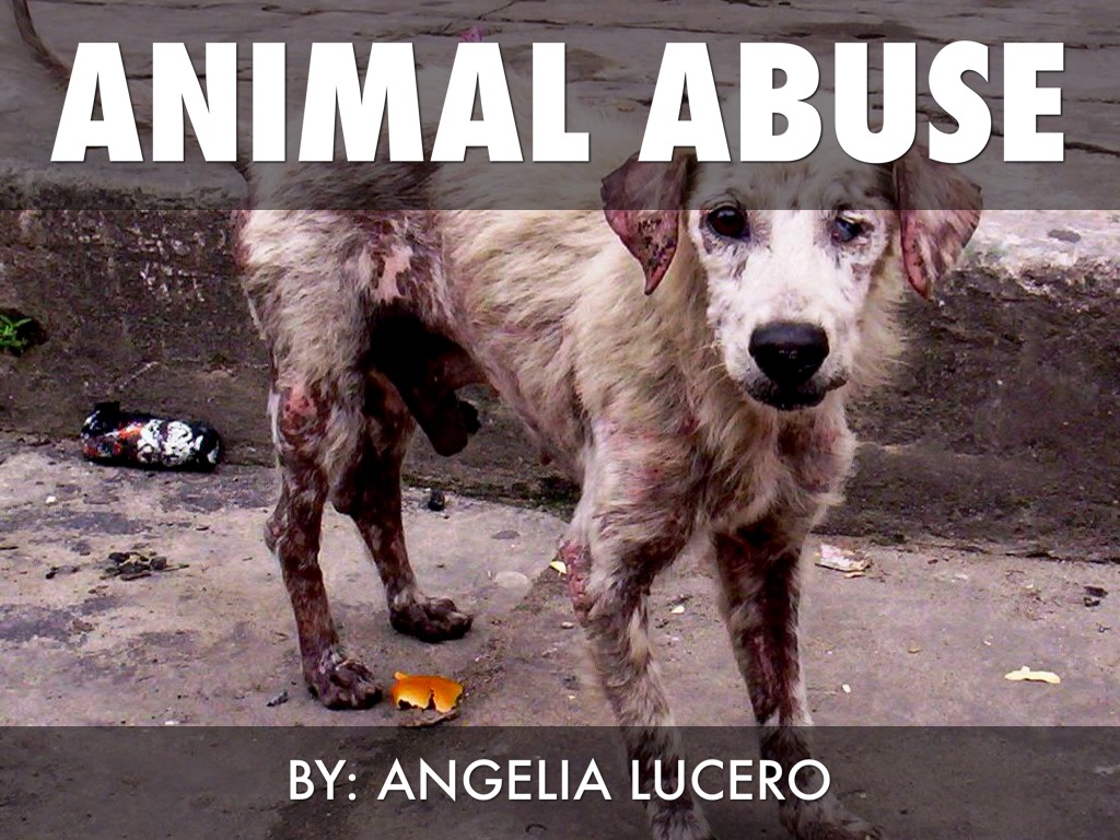 Why Are Animals Being Abused?