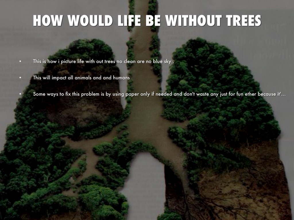 life without trees You might not have noticed a drastic change in your daily life due to the loss  not to mention without the trees that scrub air pollution from the.