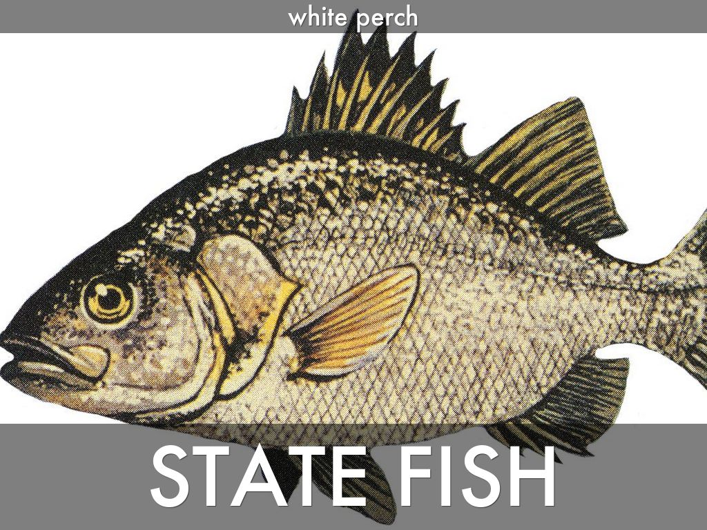 la state freshwater fish coloring pages - photo #30