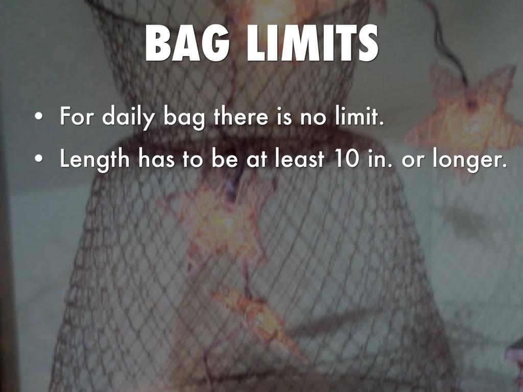 Vermilion snapper by ameliaj chandler for Texas fishing bag limits