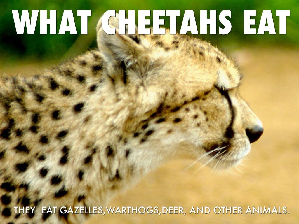 When Do Deer Eat Certain Food