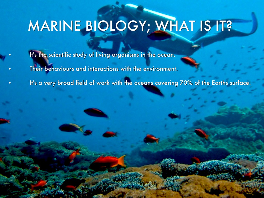 marine biologist how to become