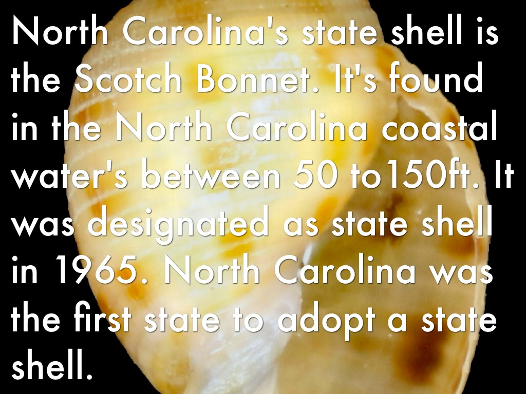 Nc symbols project by arianna arrington north carolinas state shell is the scotch bonnet its found in the north carolina coastal waters between 50 to150ft it was designated as state shell in buycottarizona