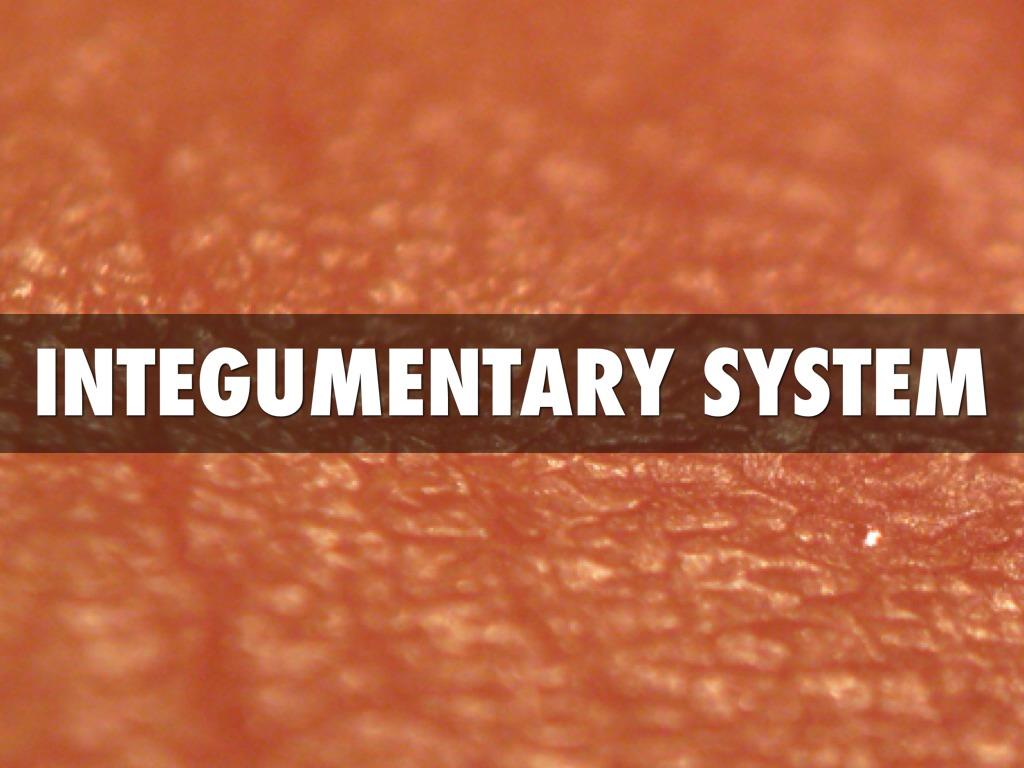 Integumentary System By Karen Klan