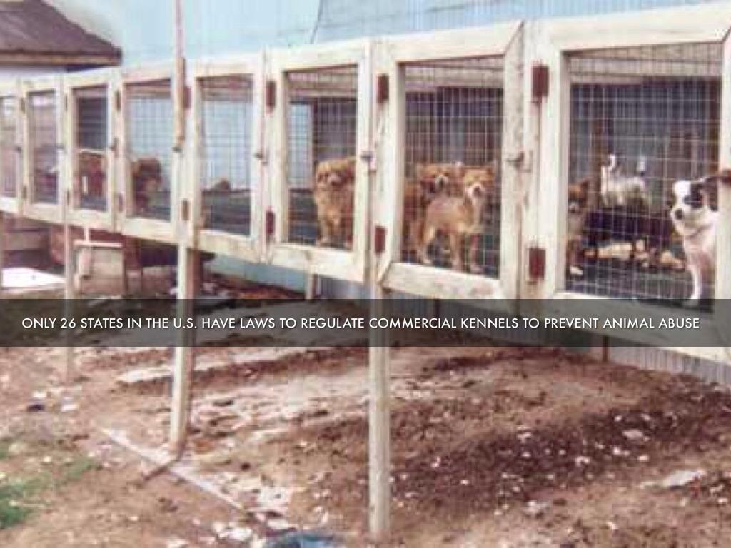 against animal abuse essays