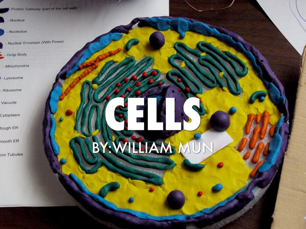 Сделать макет клетки своими руками биология 5 класс