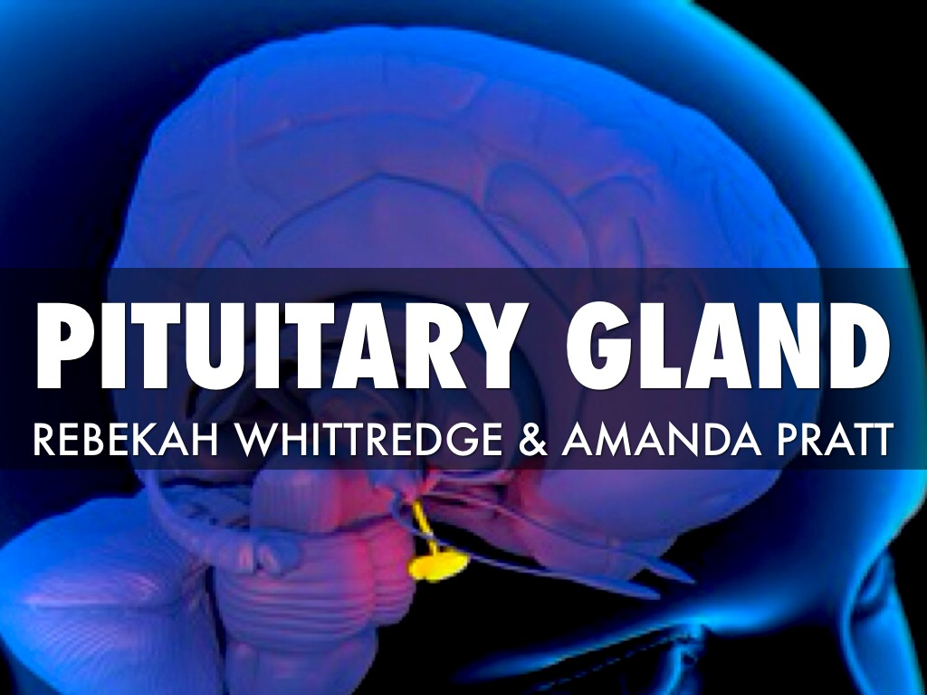 Pituitary Gland By Rebekah Whittredge
