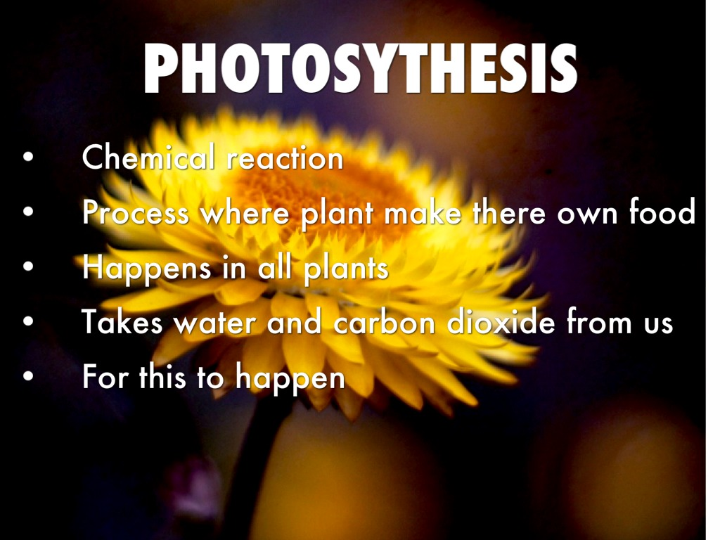 photosythesis takes