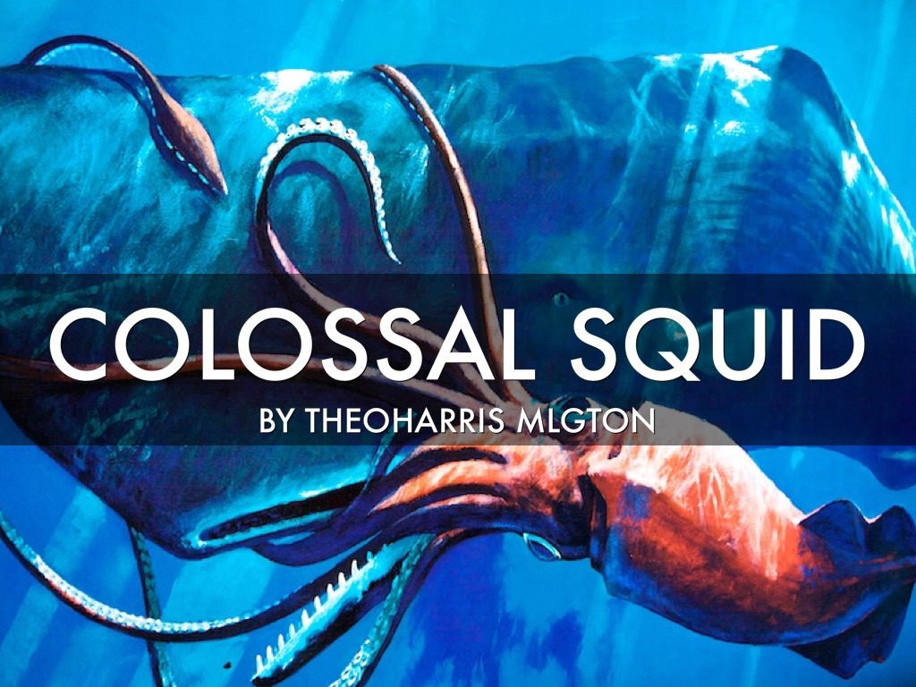 squids colossal squid essay example The colossal squid eats large fish types of squids biggest snake in the world 10 examples of predator-prey relationships.