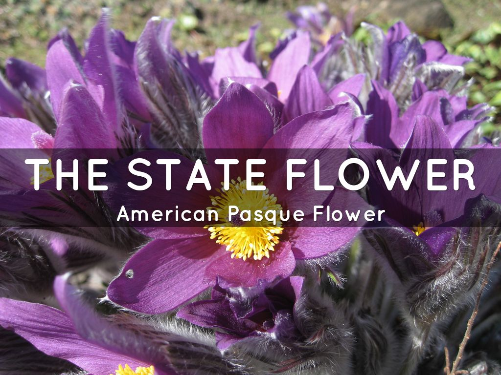 the state flower