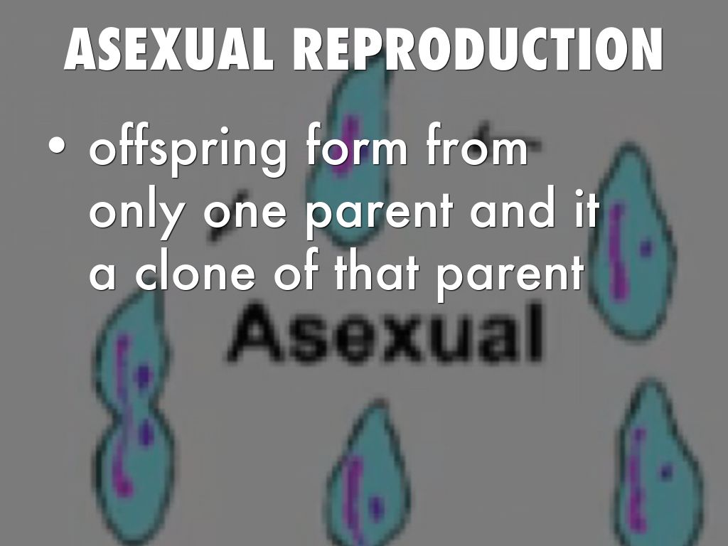 asexual reproduction stifles potential change Potential regeneration asexual reproduction also enables some organisms to rapidly produce a large number of change the underlined word(s) to make it true.