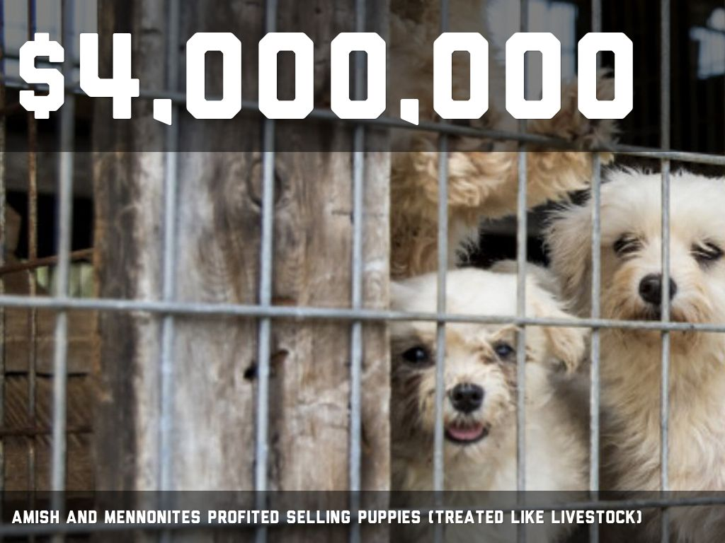 puppy mills by Lance Enger