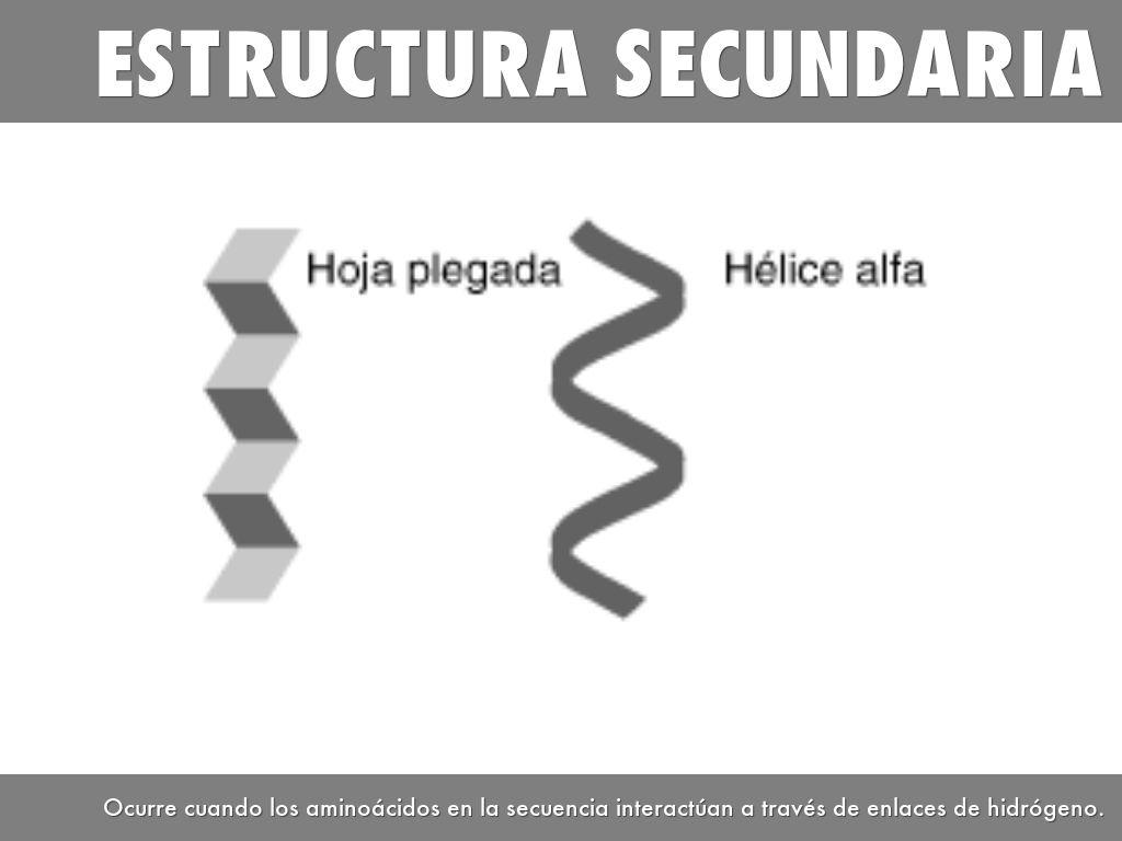 Estructura De Las Proteínas By Sandy Dusk Mg