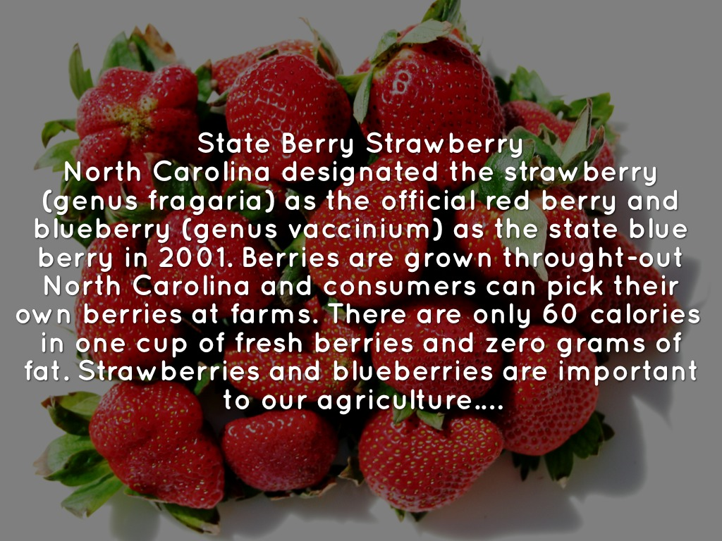 State symbols by savannah diven north carolina designated the strawberry genus fragaria as the official red berry and blueberry genus vaccinium as the state blue berry in 2001 buycottarizona