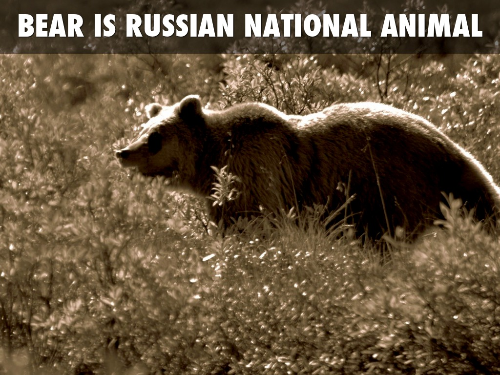 Russia-Native Animals - Elk at Meschera Reserve | Flickr ... |Native Animals From Russia